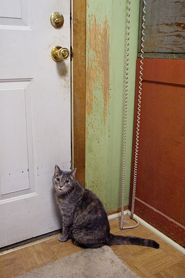 A gray tortoiseshell cat sits by the back door demanding to be let outside.