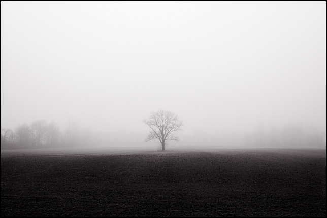 A lonely tree shrouded in fog stands in the middle of an empty field on a farm along State Road 3 near Huntertown, Indiana.