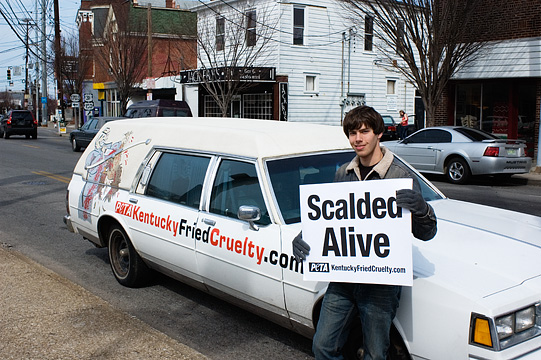 A PETA animal rights activist stands in front a hearse parked in front of a KFC restaurant in Louisville. His sign says Scalded Alive, and the hearse has a painting of Colonel Sanders stabbing a live chicken with a huge knife. The car has Kentucky Fried Cruelty painted down the sides.