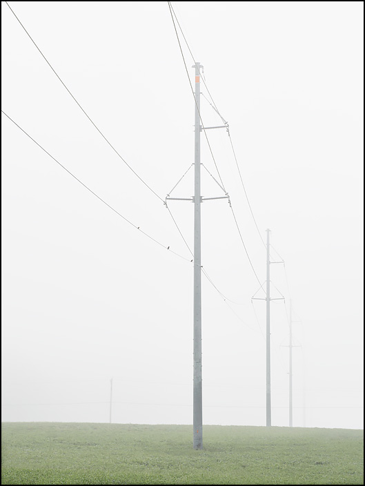 Steel pole electricity pylons stretch out across a soybean field on a very foggy morning in rural Indiana. The field is on the corner of Lower Huntington Road and Coverdale Road in Allen County. Small birds sit on the power lines.
