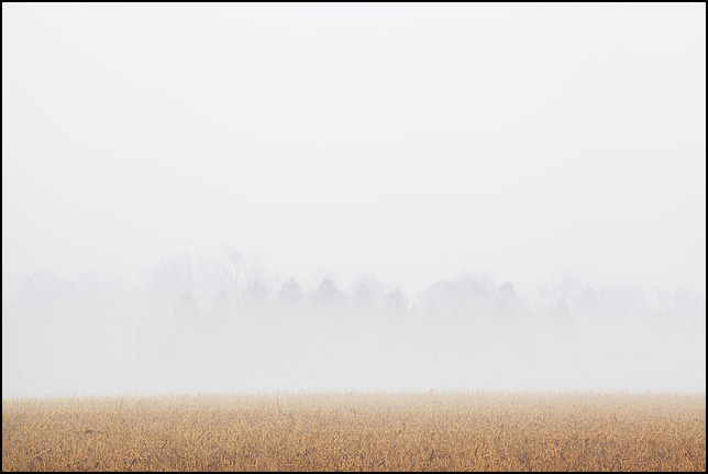 Treetops stick out from the heavy fog that blankets a field in Wells County, Indiana.