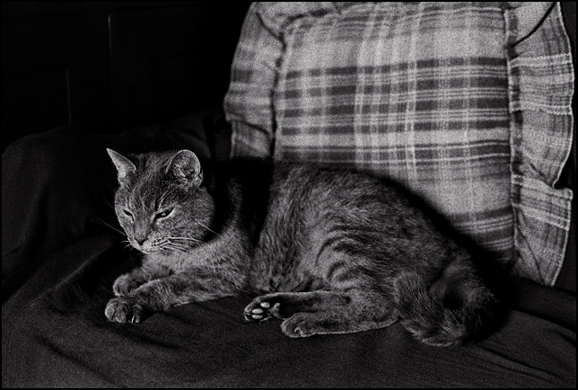 My grandpas old cat with a mean look on her face laying on a sofa in a darkened room.