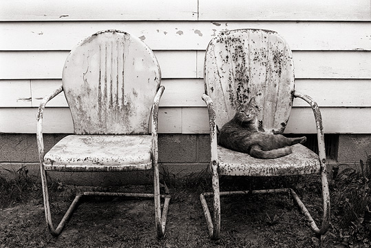 Grandpas old gray tabby cat rests on one of the old rusty metal motel chairs next to his house.