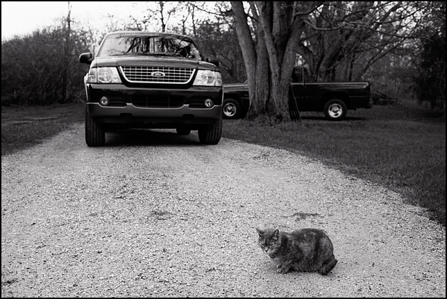 A sad looking old grey cat sits in the driveway in front of an SUV.