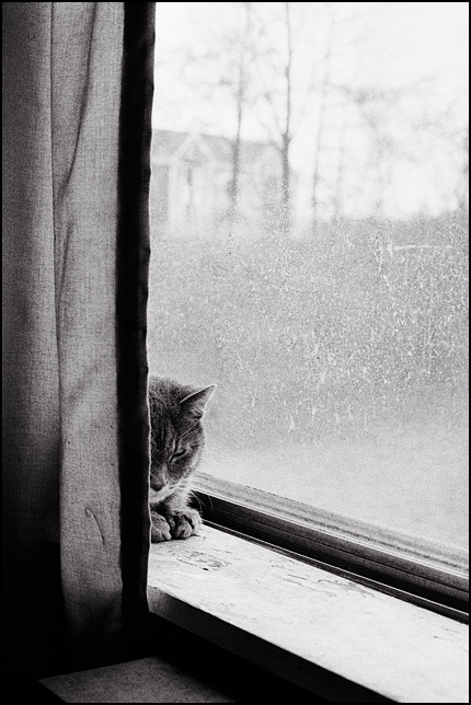An old grey cat sleeps in the window with her head bowed. She is half hidden behind a dark curtain.