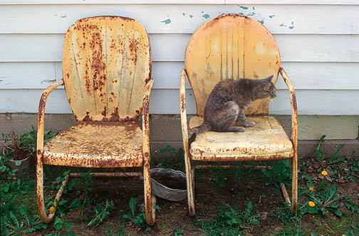 A gray cat looks out in the distance while sitting on my grandparents rusty old metal motel chairs.