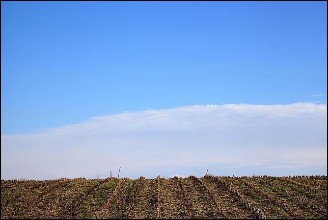The rows in a harvested cornfield stretch out to the horizon, where a large translucent cloud reaches up from the Earth into a pale blue sky on County Road 250W in rural Noble County, Indiana.