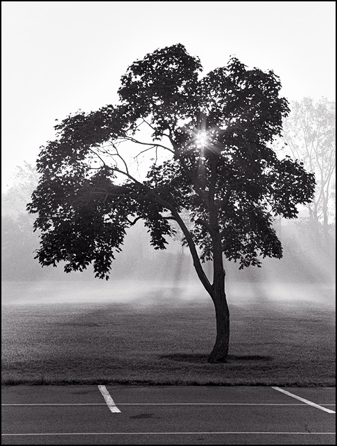 Rays of sunlight shine through the fog behind a tree on the edge of a parking lot on a hazy morning.