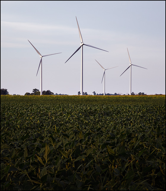 Wind turbines in a soybean field in rural Paulding County, Ohio.