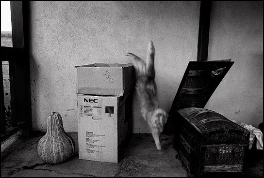 A long haired cat jumping off of a box behind a house.