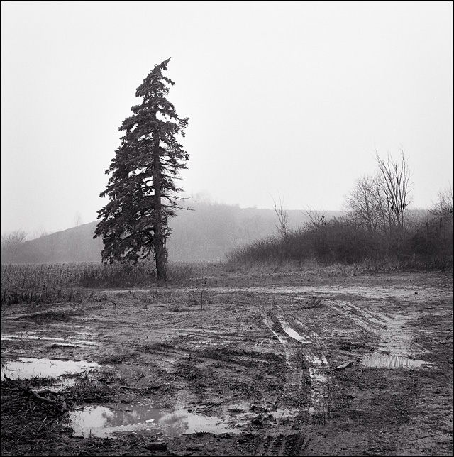 A pine tree with the branches on one side cut off stands in the fog next to a muddy plot where a farmhouse had been demolished.