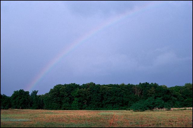 A rainbow over a wooded area in Fort Wayne, Indiana.
