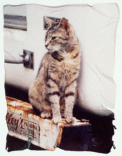 Polaroid emulsion transfer photograph of a mean looking tabby cat sitting on the bumper of an RV.