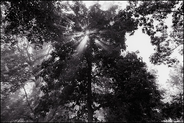 Rays of sunlight shine down from the heavens through the trees at Johnny Appleseed Park in Fort Wayne, Indiana.