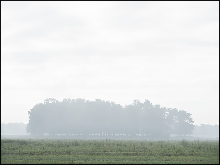 A small forest in the middle of a field shrouded by fog on Rohman Road in rural Allen County, Indiana. Photographed on a hazy September morning.