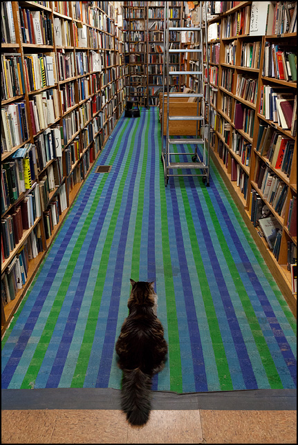 A cat sits at the end of an aisle watching over the store at Hyde Brothers Books in Fort Wayne, Indiana. The cat is a longhaired cat with a big bushy tail.