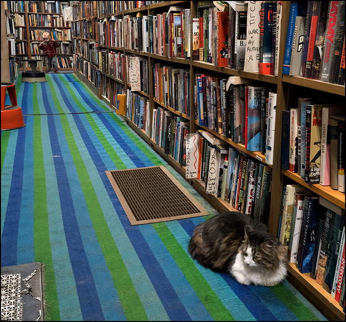 A bookstore cat sits in an aisle at Hyde Brothers Books in Fort Wayne, Indiana. She looks annoyed because a little kid in the background is making noise while his mother tries to calm him down.