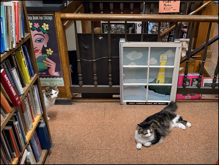 Two bookstore cats in one of the aisles at Hyde Brothers Books in Fort Wayne, Indiana. The longhaired one is laying on the floor and the shorthaired cat is peering around the end of a bookshelf.