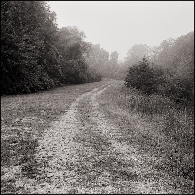 A long gravel road leading to a forest in the distance on a foggy morning.