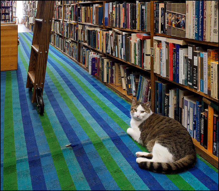 Sherlock, a fat bookstore cat lays in an aisle at Hyde Brothers Books in Fort Wayne, Indiana. He is a shorthaired white cat with tabby splotches.