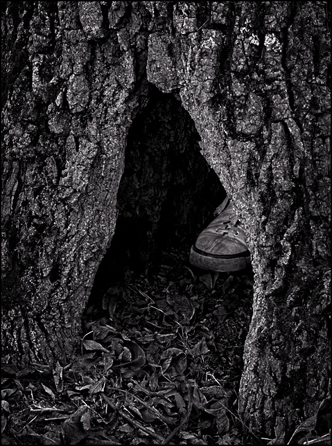 A canvas athletic shoe in the opening of a hollow tree, which looks like someone is hiding in the tree.