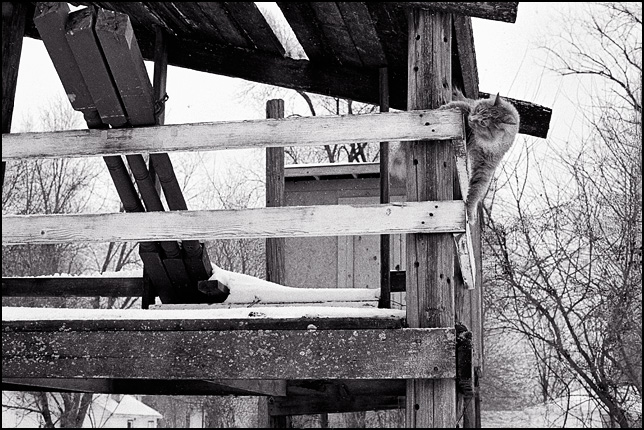 A cat clinging to the narrow rails around a kids playhouse built on tall wooden utility poles.