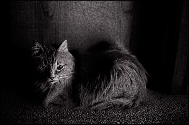 An old longhaired cat sits in a darkened room in front of a kitchen cabinet.