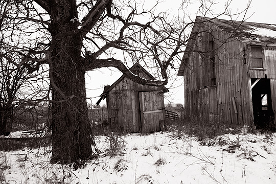 Two abandoned barns with weathered wood behind a large tree in the winter on an abandoned farm in Allen County, Indiana.
