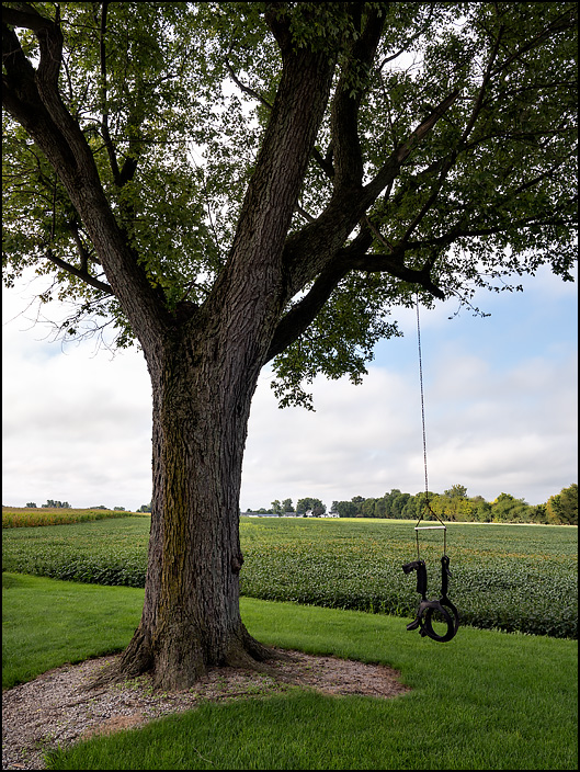 A tire swing shaped like a horse hangs from a tree on the edge of a soybean field on State Road 37 in rural northeast Allen County, Indiana. Photographed on a late summer morning.