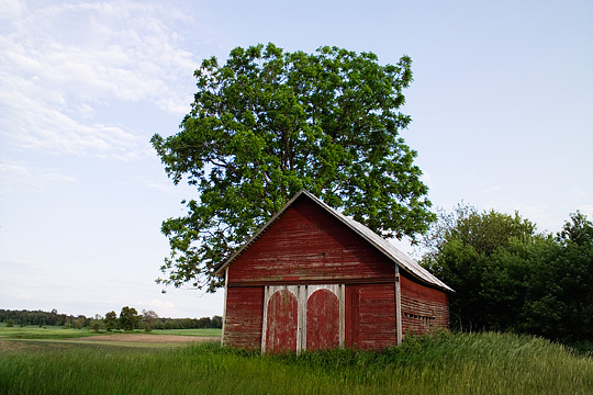 An old red barn surrounded by tall waves of grass on a farm in Steuben County, Indiana.