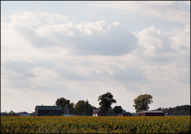 A sunflower farm at the intersection of County Road 900N and State Road 9 in Huntington County, Indiana. The farmhouse and several red barns are visible in the distance on the far side of a vast field full of sunflowers.