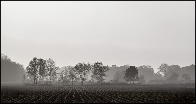 A line of trees veiled in fog on the edge of a farm in rural Allen County, Indiana.