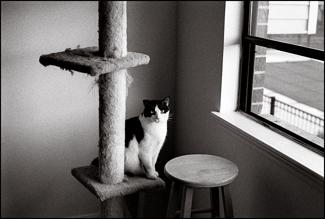 A black and white bicolor cat sits on a cat tree scratching post next to a window. He is staring at me.