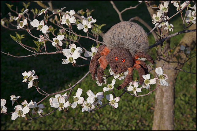 Hairy The Spider, a Ty Beanie Baby, crawling through the flowers on a dogwood tree.