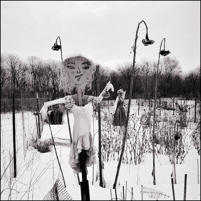 Two scarecrows stand in a snow-covered field surrounded by dead sunflower plants at the Fort Wayne Parks and Recreation Community Garden on Bluffton Road.