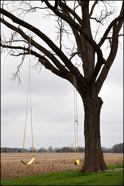 Two yellow swings hang on a tree on the edge of a cornfield on a farm in rural Allen County, Indiana.