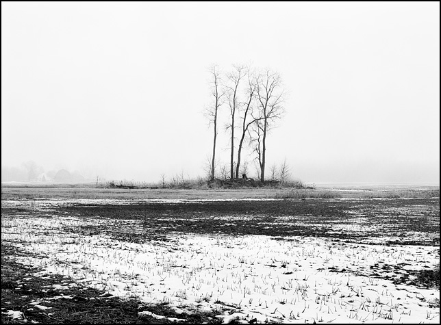 A group of four trees in the middle of an icy snow-covered field on Yohne Road in rural Allen County, Indiana.