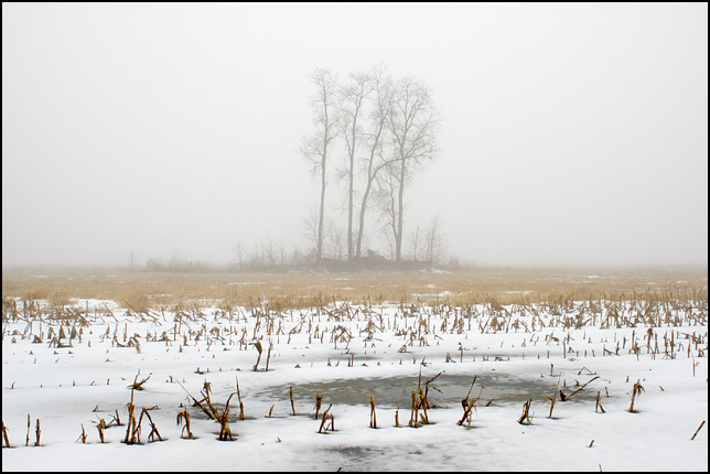 A group of trees in the middle of a snow covered cornfield with a puddle of frozen water in the foreground on Yohne Road near the National Serv-All landfill in Allen County, Indiana.