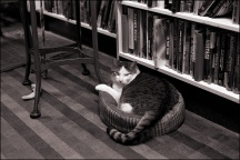 Sherlock The Bookstore Cat #3