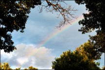 Backyard Rainbow #1