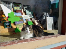 Cat In The Bookstore Window #1