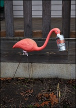 Flamingo Enjoying a Beer in Waynedale