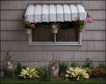 American Flags and Geraniums