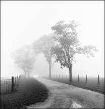 Foggy Lane #2