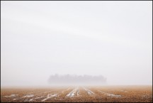 Foggy March Evening In Wells County #2