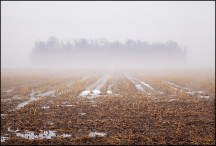 Foggy March Evening In Wells County #4