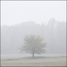 Foggy May Morning in Southwest Allen County #1
