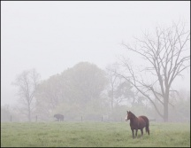 Foggy May Morning in Southwest Allen County #3