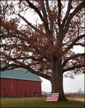 Barn and Tree on O'Day Road #1