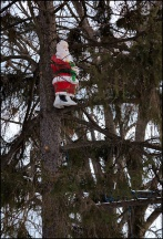 Santa Claus In A Tree